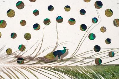 Kuş Kanatları ile Yaratıcı Denemeler - Chris Maynard