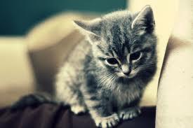 Kitten on the Verge of Jumping