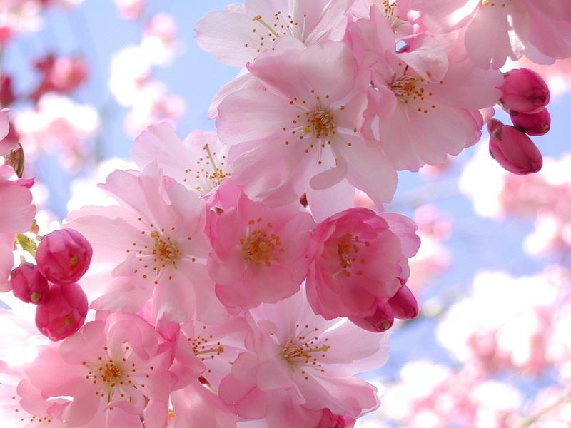 Spring flowers juno kendi halinde bir yldz gzlemcisi spring flowers mightylinksfo